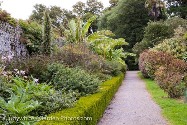 Banana-Trees-Fota-Arboretum-Ireland-017473