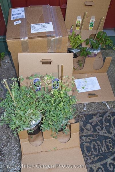 Mail Order Plants Romence Gardens Has A Very Happy Customer