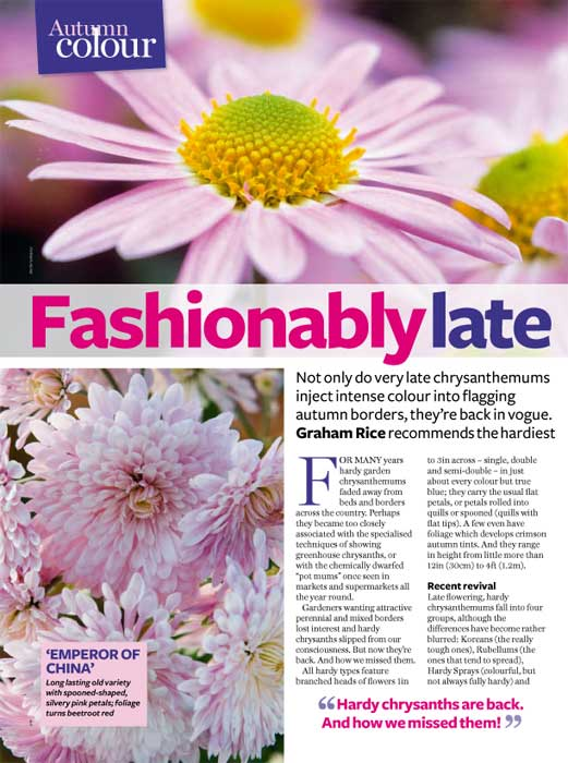 AG-Chrysanths-Nov2010-1