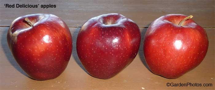 RedDeliciousapples