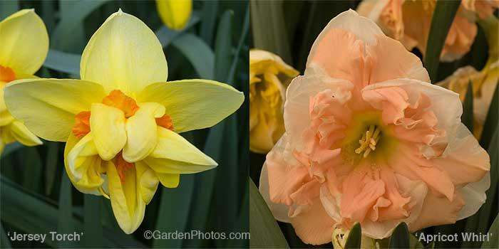 NarcissusJTorchAWhirl