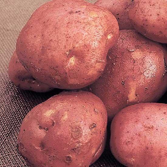 PotatoDesireeMarshalls