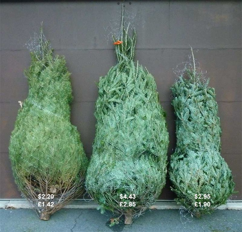ChristmastreesPrices