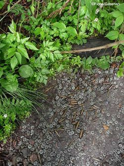 Spent bullet casings and buttons line the path of the DMZ garden (Gold). Image © Fiona Gilsenan