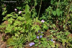 A weedy wall in the Plankbridge Hutmakers garden (Silver Medal). Image © Fiona Gilsenan