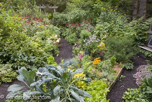 Our Pennsylvania garden flourishing in late July. Image ©GardenPhotos.com (All rights reserved)