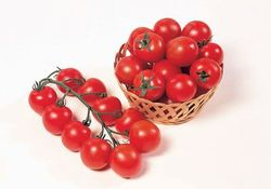 The hybrid tomato 'Sweet Chelsea' tasted better than many heirlooms ©Sakata Seeds