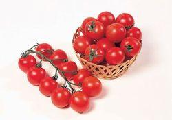 The hybrid tomato 'Sweet Chelsea' tasted better than many heirlooms ©Sakata Seeds