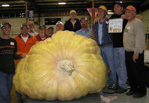 World record Pumpkin weighing 2009 pounds. Image ©BigPumpkins.com
