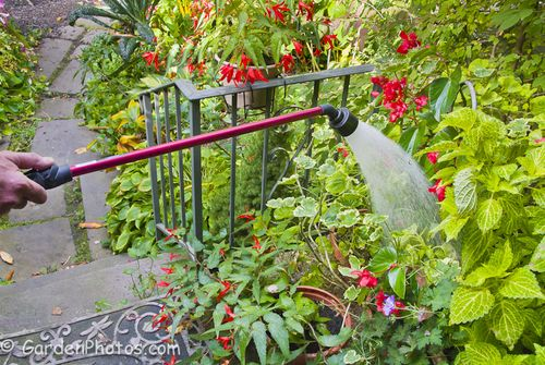 One Touch™ Rain Wand from Dramm, 30in/76cm model. Image ©GardenPhotos.com