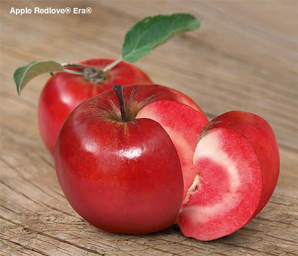 AppleRedloveEraSuttons