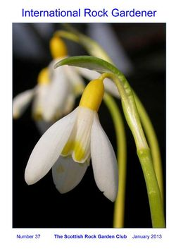 The cover of the January 2013 International Rock Gardener features Galanthus 'Grake's Gold'