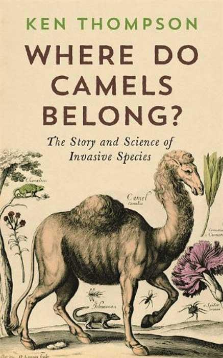 CamelsCover