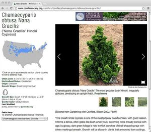 American Conifer Society website Conifer Database entry