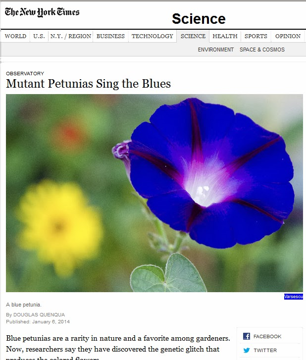 Mutant+Petunias+NYT+6Jan_2014