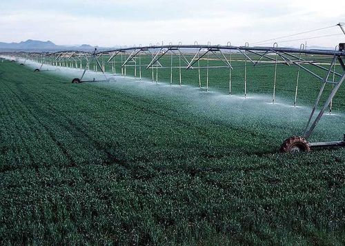 Irrigating Wheat! Using an overhead spray line. Image ©USDA