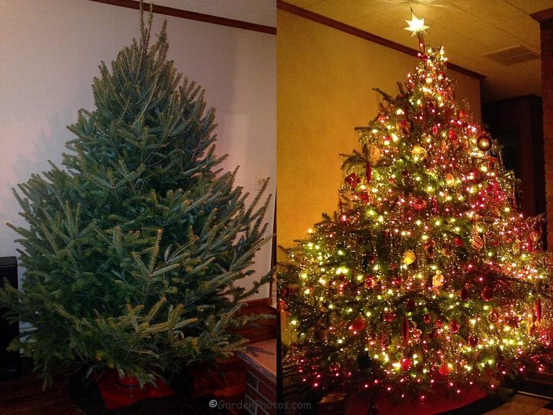 ChristmasTreeTwice