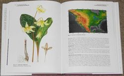 Erythronium californicum, painting by Christabel King and distribution map