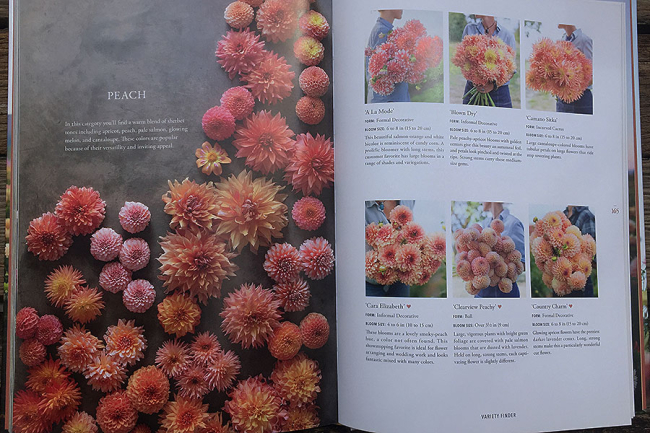Discovering Dahlias by Erin Benzakein - the first peachy pages