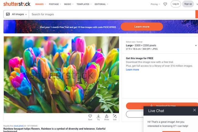 An image of fake 'Rainbow' tulips