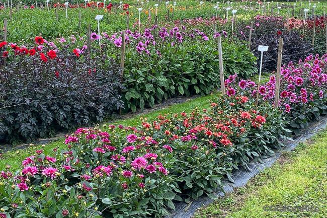 Halls of Heddon display garden